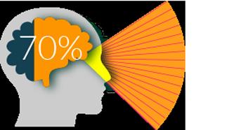 70% of sensory receptors